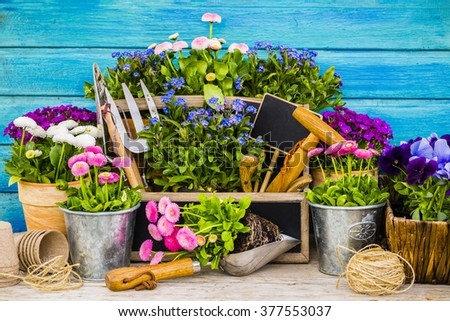 Garden tools, flowers on a wooden background - stock photo