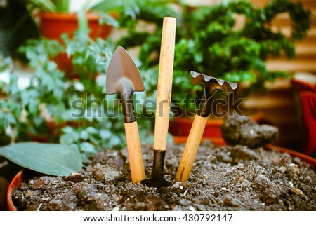 Garden tools is in the soil in the pot, house plants, shovel, rake, pitchfork. - stock photo