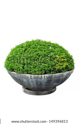 garden tree - stock photo