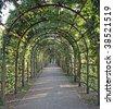 Garden-Way, coverd by tendrils - stock photo