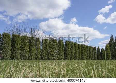 garden with fence made by pine trees under beautiful sky - stock photo