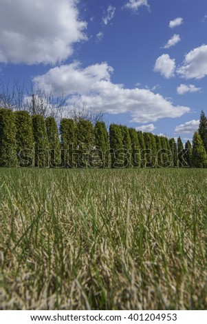 garden with fence made with pine trees under beautiful sky - stock photo