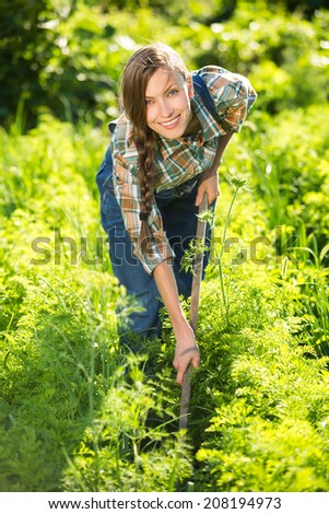 Garden work. Young gardener remove, pulling out weeds in carrot rows. backlit - stock photo