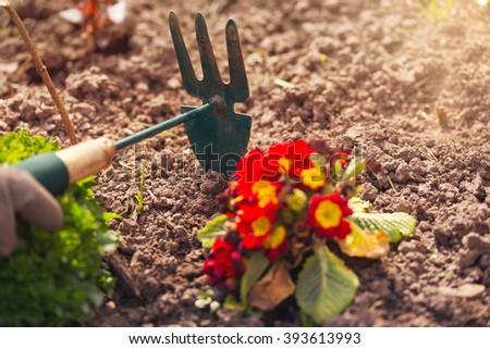 Gardener cultivating flowers in the garden - stock photo