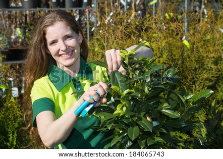 Gardener cutting branches of a tree in nursery - stock photo