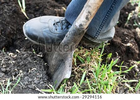 Gardener digging with garden spade in black earth soil - stock photo