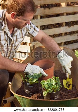 Gardener farmer transplanting potting new plants for the beginning of the growing season - stock photo