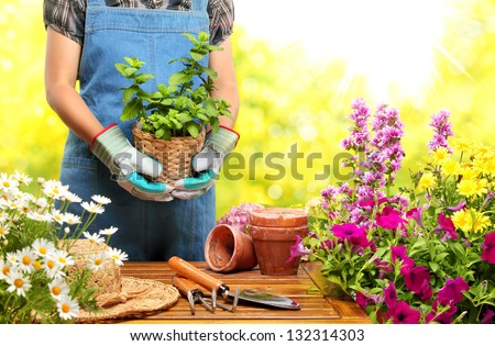Gardener  holding a pot with plant in garden - stock photo