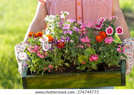 gardener holding box with flower seedlings - stock photo