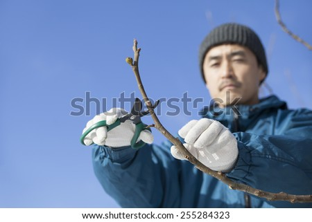 gardener pruning a tree - stock photo