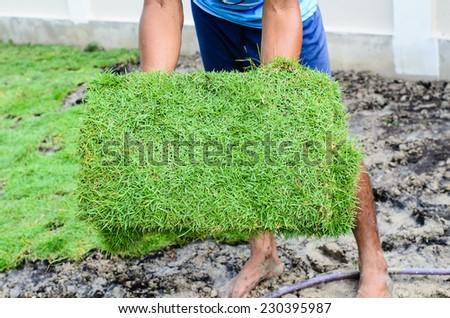 Gardener showing green grass for spreading backyard. - stock photo