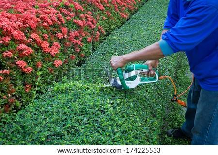 Gardener trimming the tree. - stock photo