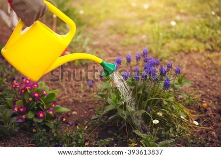 Gardener watering flowers in a garden - stock photo