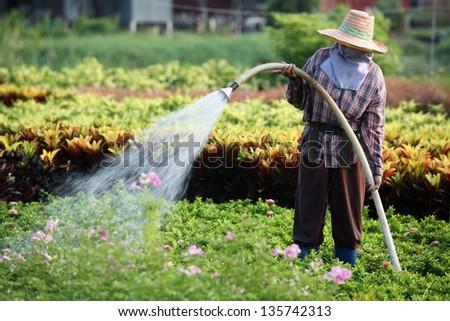 gardener watering plant. - stock photo