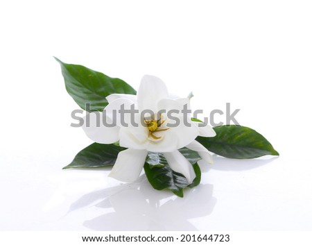 Gardenia flower  - stock photo
