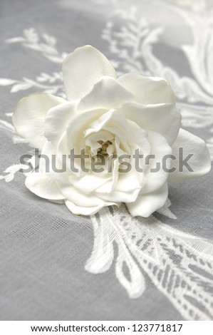 Gardenia lying down with lace texture - stock photo