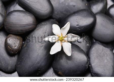 Gardenia on black pebbles  - stock photo