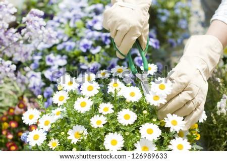 gardening - stock photo