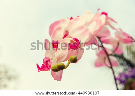 gardening, botany and flora concept - beautiful orchid flowers - stock photo