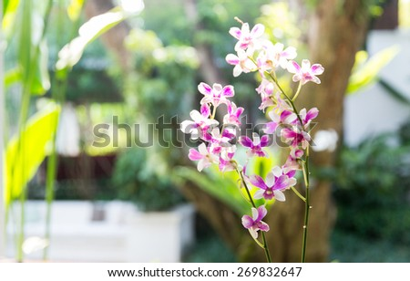gardening, botany and flora concept - beautiful orchid flowers at garden - stock photo