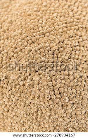 gardening, botany, texture and flora concept - dry flowers - stock photo