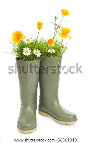 Gardening concept with flowers and grass sprouting from wellington boots - stock photo