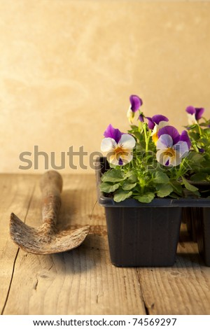 Gardening concept with seedlings and hand trowel on an old wooden table. - stock photo