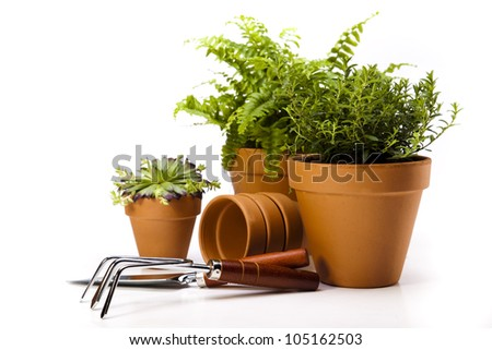 Gardening concept, work tools, plant - stock photo