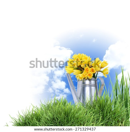 Gardening concept. Yellow daffodil flowers in metal watering can against blue sky - stock photo