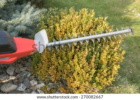 Gardening - cutting wintergreen plant by electric telescopic fence scissors. All potential trademarks are removed. - stock photo