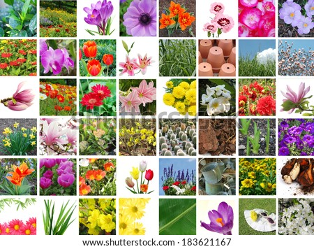 Gardening flowers collection - stock photo