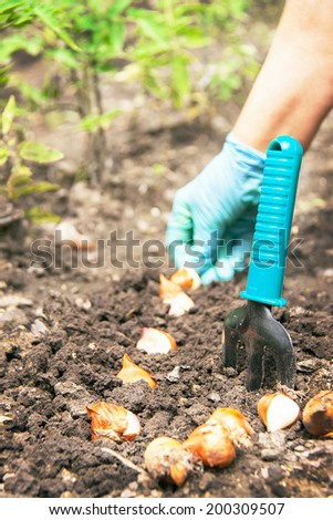 Gardening. Hands of caucasian woman are seeding (sowing) bulb of flowers in the soil (chernozem). The shovel is near at her. Active female model in sunny day involved in horticulture. Close up. - stock photo