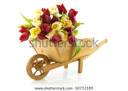 Gardening in spring with wooden wheelbarrow and tulips - stock photo