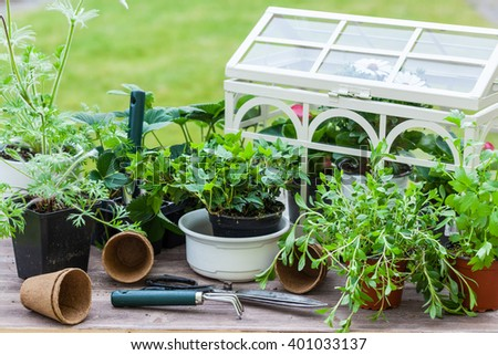Gardening - Plants with flowers and herbs in garden - stock photo