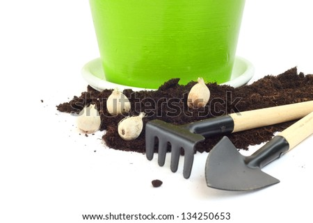 Gardening tools, flower bulbs and pot  isolated on white - stock photo