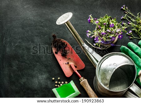Gardening tools: watering can, flowers, gloves, spade, soil and seeds on black chalkboard background. Spring in the garden concept layout with free text space. - stock photo