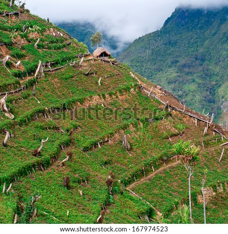 Gardens in the mountains at  island New Guinea - stock photo