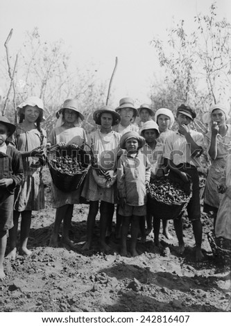 Gathering almonds at the Jewish communal agricultural settlement, a kibbutz, at Richon le Zion. Rishon LeZion one of the first settlements of Zionist Jews, was founded in 1882. Ca. 1936. - stock photo