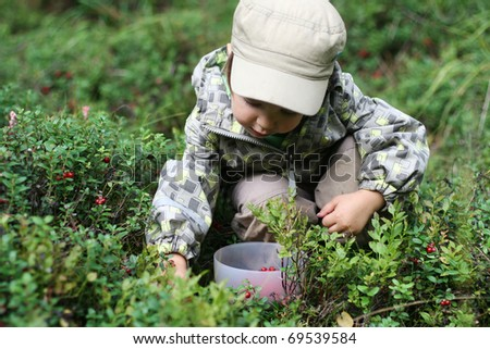 Gathering berries - stock photo