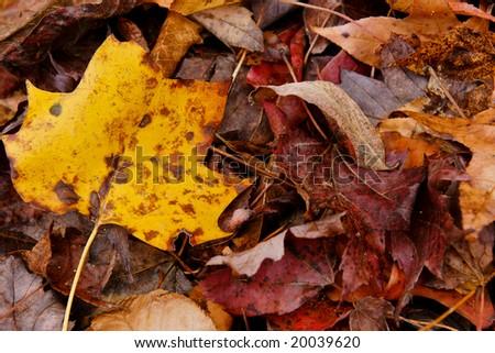 Gatlinburg - Great Smoky Mountains National Park - stock photo