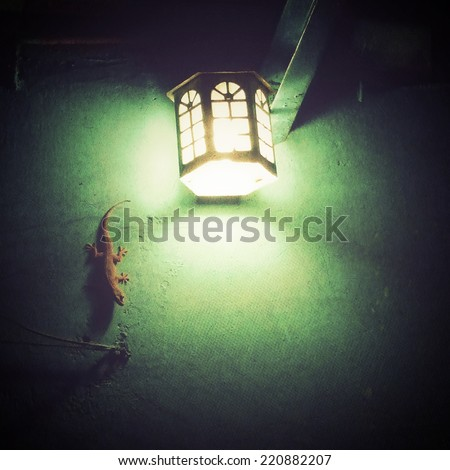 Gecko in the light on a wall - stock photo