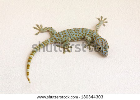 geckos on the cement wall. - stock photo