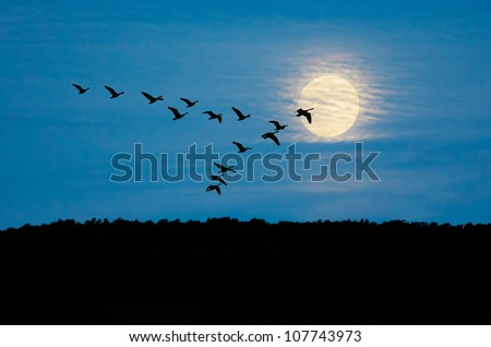 Geese flying in formation against Sky and Moon - stock photo