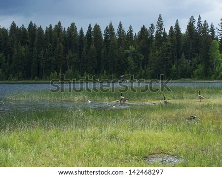Geese lake scenic - stock photo