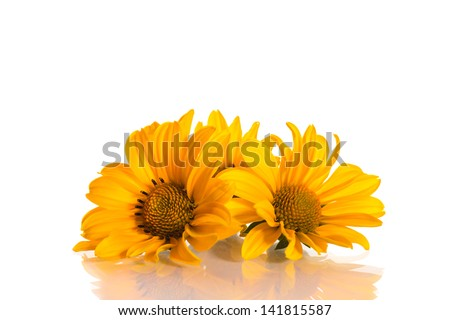 geliopsis beautiful yellow flowers isolated on white background - stock photo