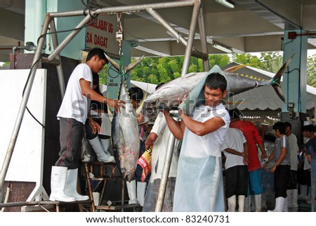 GEN. SANTOS CITY, PHILIPPINES - AUG 20: Worker carry tuna for weighing at Gen. Santos Fish Port in Gen. Santos City, Philippines on Aug. 20, 2011. Catching tunas is one of the main source of income. - stock photo