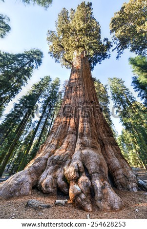 General Sherman - the largest tree on Earth, Sequoia National Park, California. - stock photo