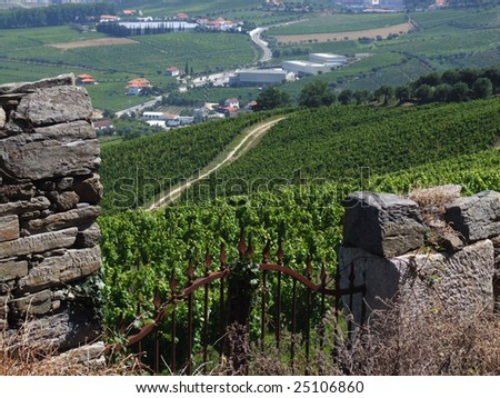 General view of a Douro vineyard - stock photo