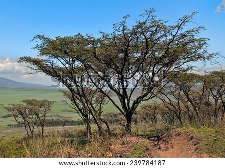 General view of the Crater Ngorongoro National Park - Tanzania - stock photo