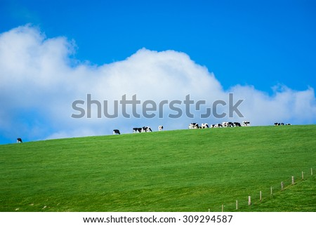 Generic green farmland with black-and-white cows standing along the ridge of a hill, with blue sky and fluffy white clouds behind. - stock photo